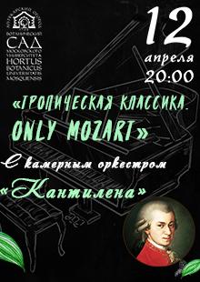 Тропическая классика. Only Mozart